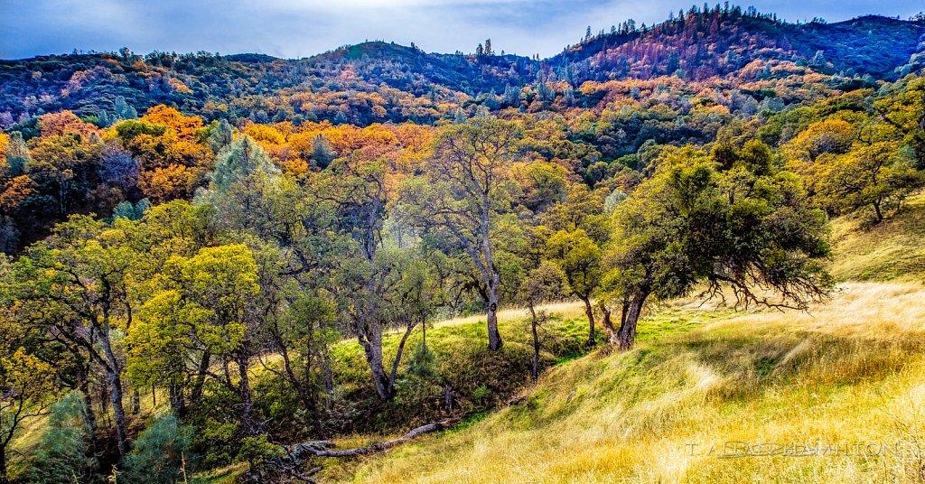 Diablo range on Mt Hamilton road in the San Antonio Valley CA130